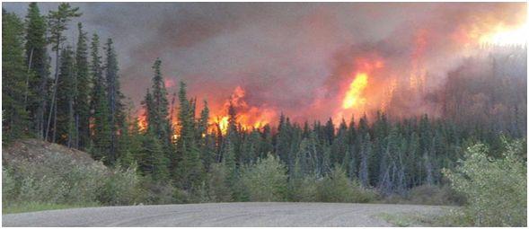 Prevent roadside wildfires
