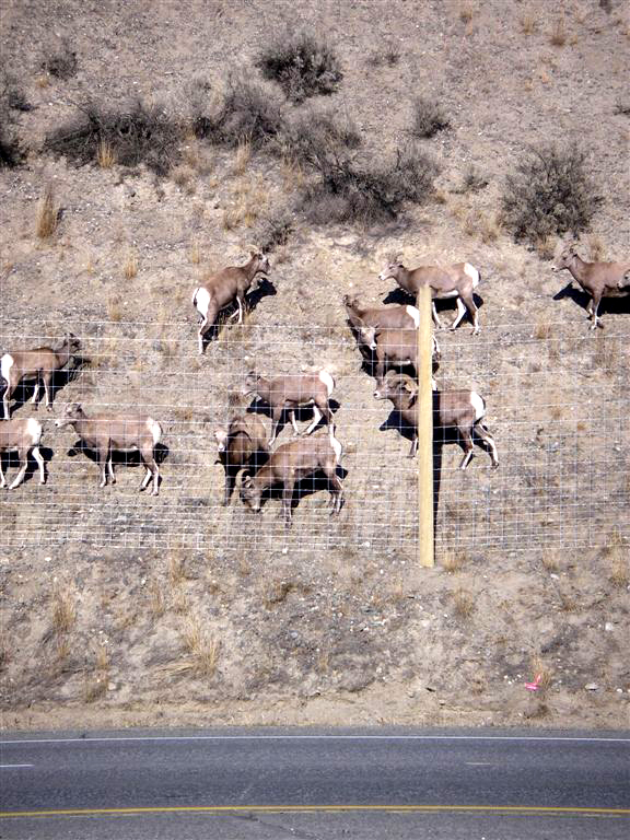 Wildlife Accident Tracking Points to Collision Prevention