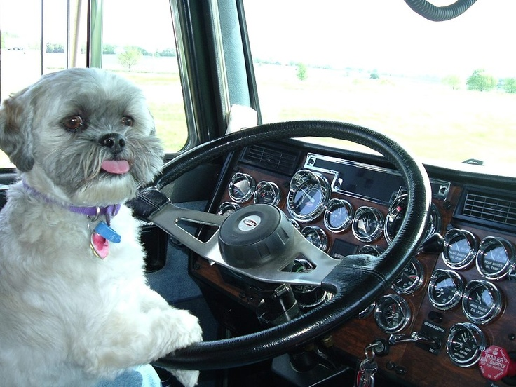 Can You Bring Your Dog While Truck Driving