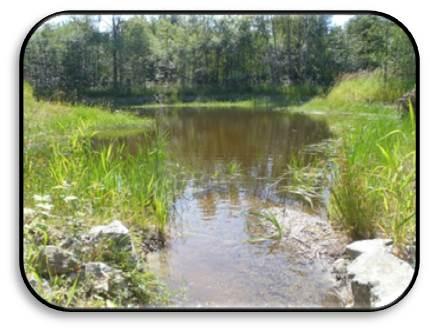 Creek SFPR