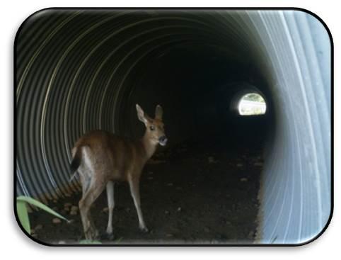 Deer SFPR