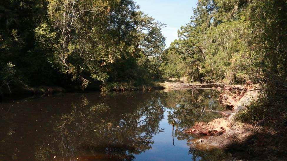 Tseycum Pat Bay Restoration Completed Creek