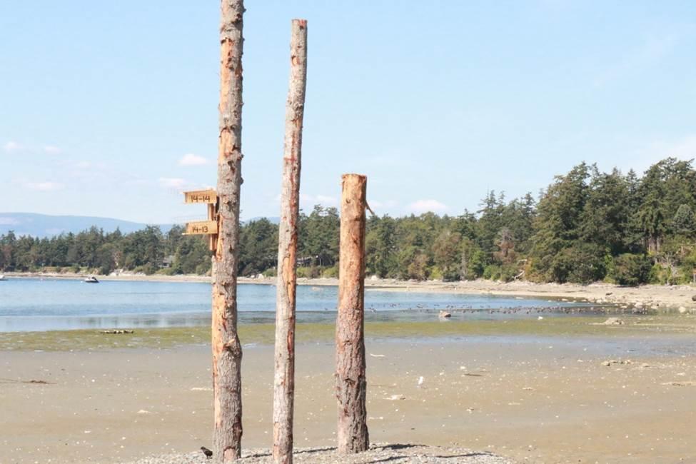 Tseycum Pat Bay Restoration Snags