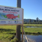 Restoring-our-salmon-habitat