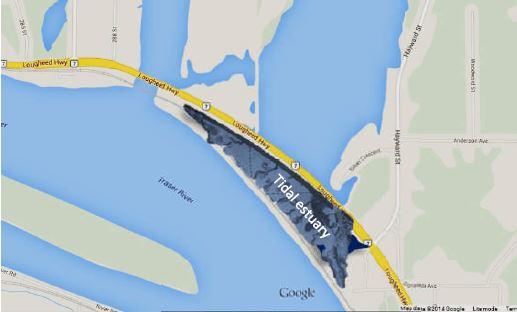 Tidal Wetland Map