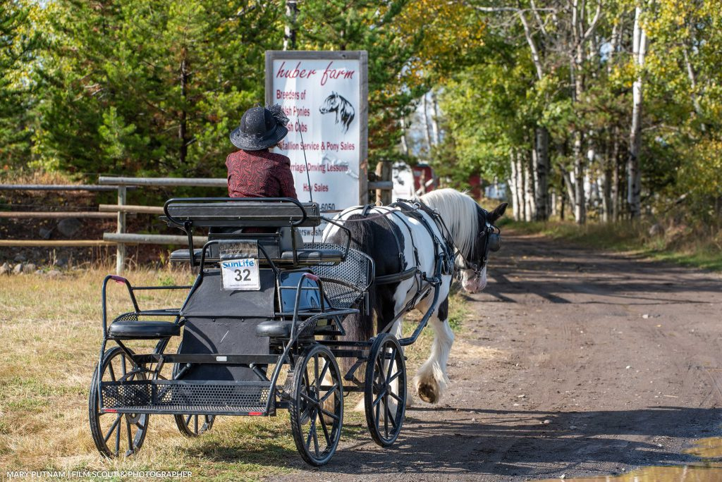 Heritage horse and carriage field driving trial